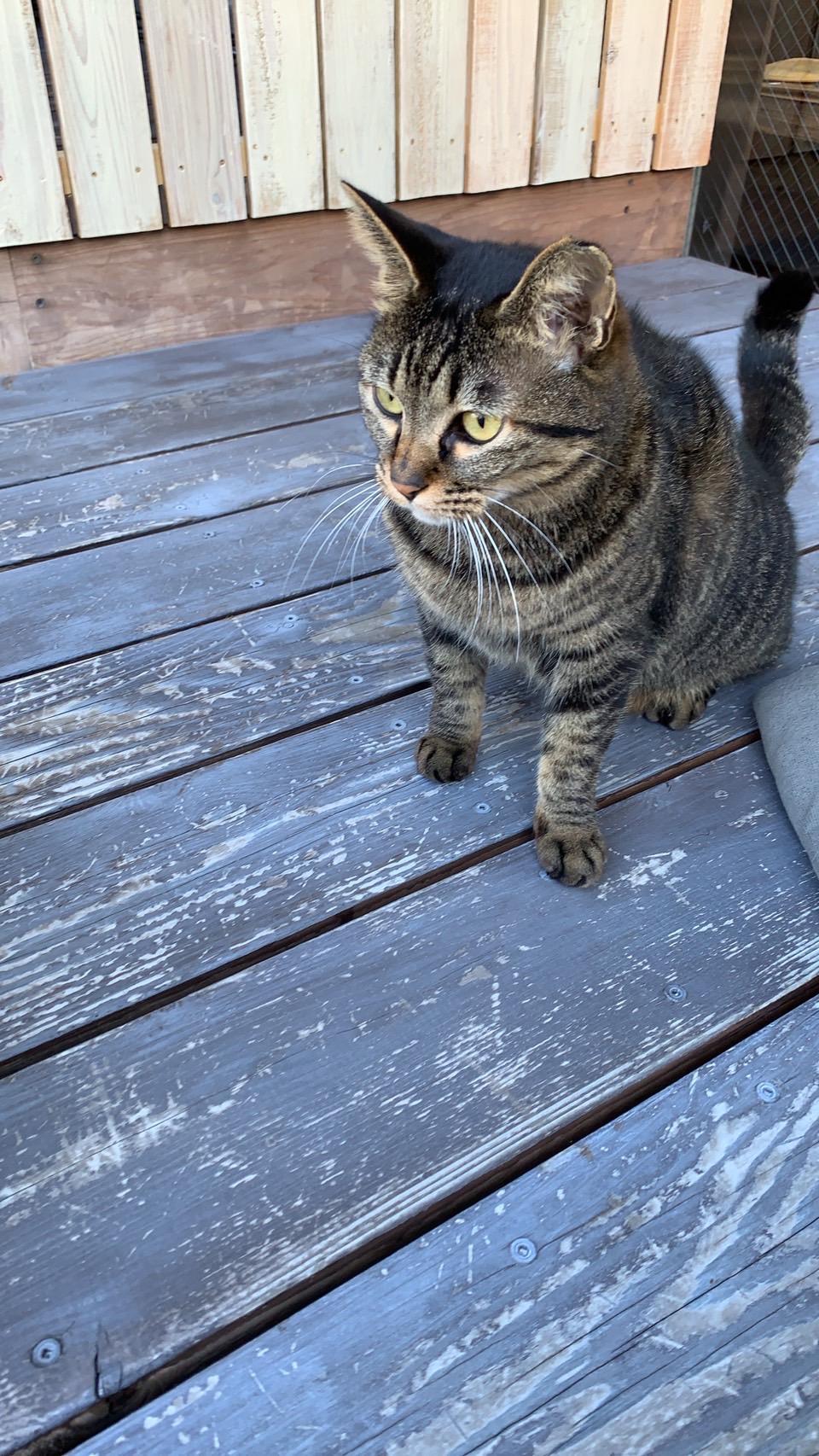 野良猫のチビ